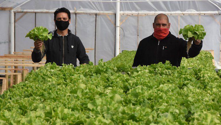 Suspendidos en el petróleo, crearon un emprendimiento de verduras hidropónicas