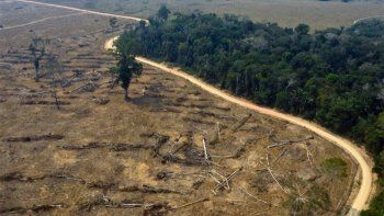 facebook actuara contra la venta ilegal de la selva amazonica