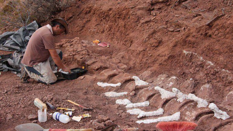 El dinosaurio hallado en Neuquén.