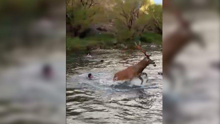 Acusaron a los hombres que atacaron brutalmente a un ciervo