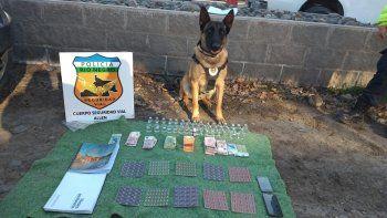 maximo lo hizo otra vez: el perro de la policia hallo droga en un micro