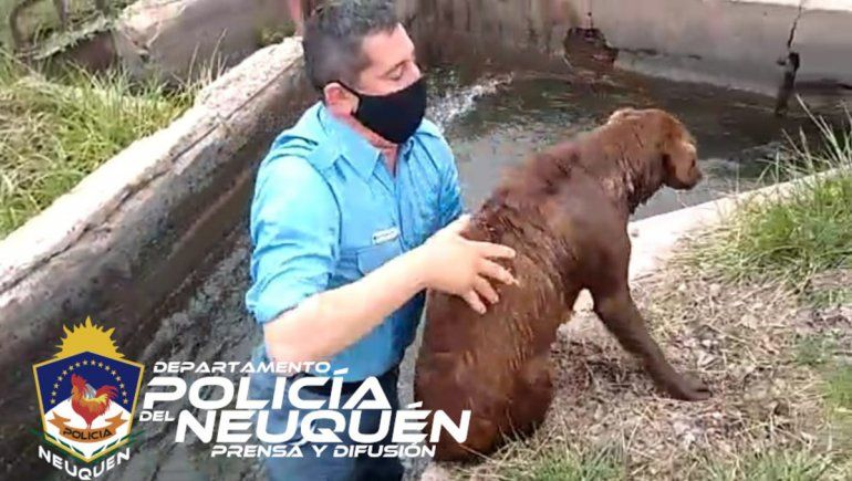 Policía se metió a un canal para rescatar a una perra