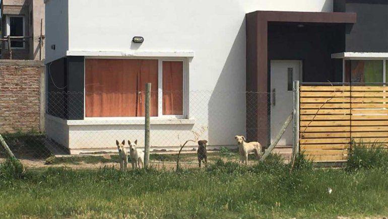 Perros sueltos y desnutridos amenazan a vecinos de Plottier