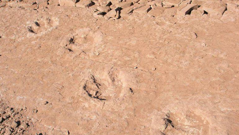Aparecieron 12 huellas de dinosaurio en Chocón Medio