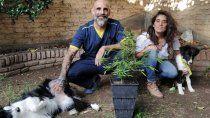 veterinarios neuquinos buscan la regulacion del uso de cannabis en animales
