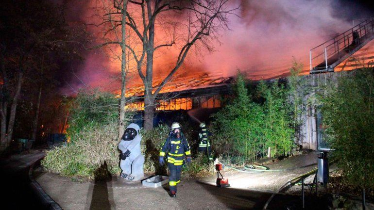 Fuegos artificiales queman zoo y mueren 30 monos