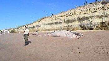 Encuentran una ballena muerta en la playa de Las Grutas