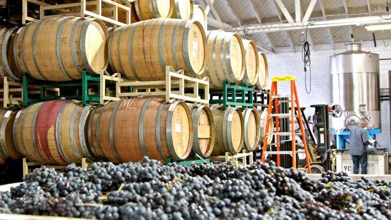 Una duda: ¿cómo se hace el vino?