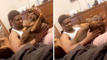 Perro es viral tras hacer rutina de ejercicios con su dueño.