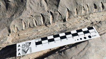 un operario de vialidad encontro fosiles de un reptil marino en vaca muerta