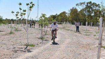 en un ano el municipio planto mas de 11.500 arboles