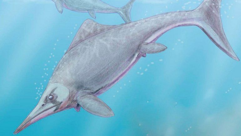 Hallan en Zapala restos de un reptil terrestre que vivió hace 150 millones de años