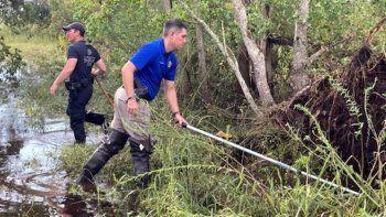 atrapan a un caiman que se comio a un hombre de 71 anos