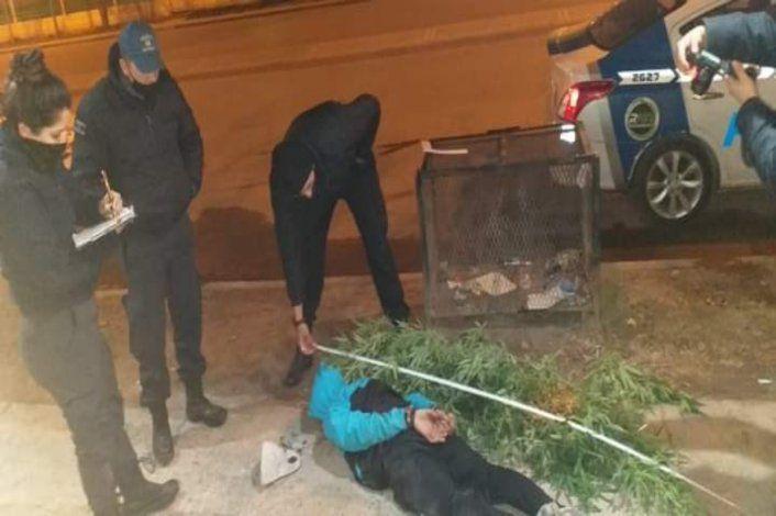 Intentó ocultarse en una garita con dos plantas gigantes de marihuana