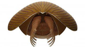 titanokorys gainesi, el nuevo gigante del cambrico