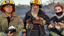 Bomberos de Matheu rescatan cachorros de un incendio.