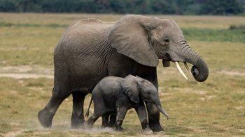 Soñar con elefantes: conocé qué significa