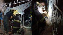 un perro se atoro en una reja y lo rescataron los bomberos