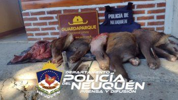 Personal del Destacamento Nahuel Huapi decomisó carne que era transportada de manera ilegal en un auto.