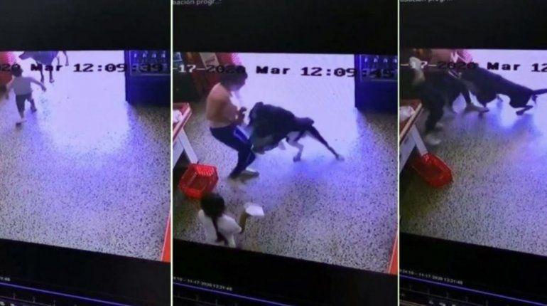 Video: un perro atacó a un nene que se acercó a acariciarlo