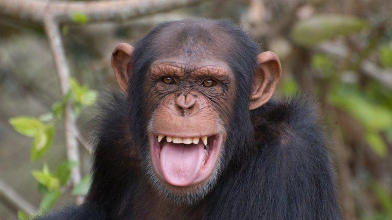 Soñar con monos: mirá qué significa