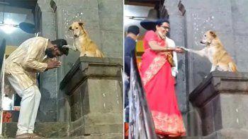Es un perro que se viralizó en Facebook por bendecir a los humanos a las afueras de un templo