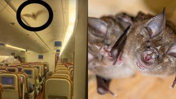 Viral: pasajeros aterrados por un murciélago dentro del avión.