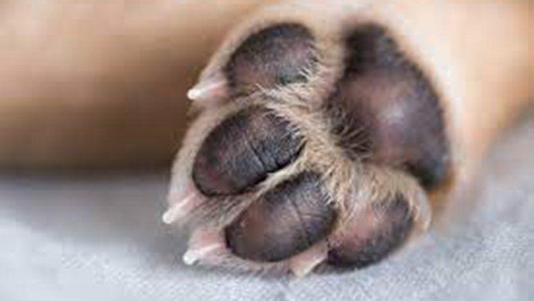 Aberrante: un hombre ató a su perro y lo dejó morir de hambre