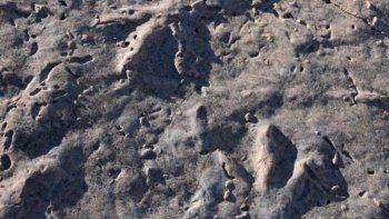 hallaron nuevas huellas de dinosaurios en picun leufu
