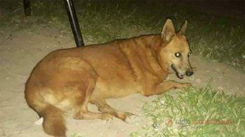 ¿Ritual satánico o brutalidad humana?: Violaron y asesinaron a una perra