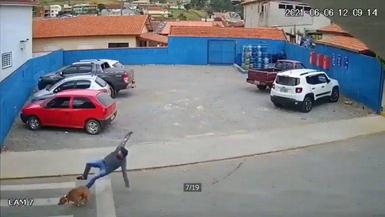 Viral: un perro atropelló a un hombre