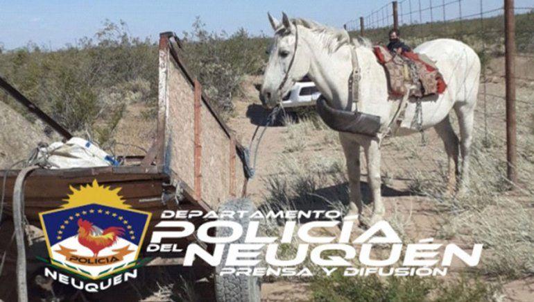 Sorprendieron a 4 jóvenes robando cables: un caballo, el principal testigo