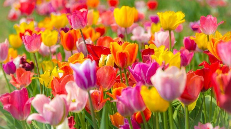 Zodiaco: qué flor debes cultivar según tu signo
