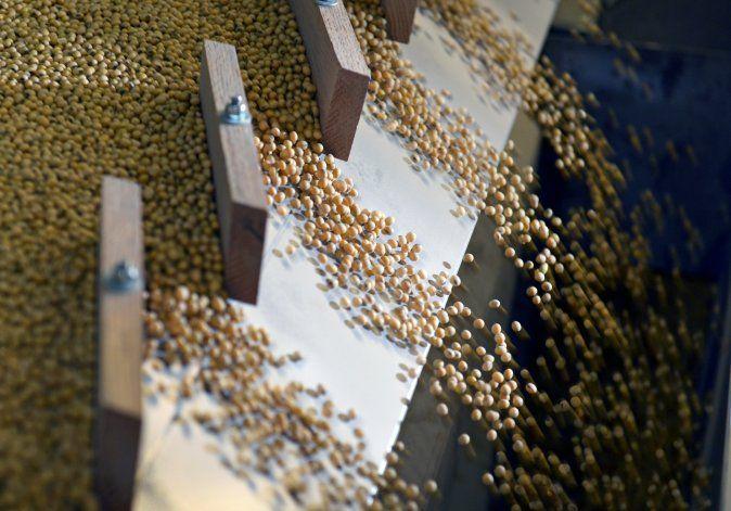 La soja siendo clasificada según su peso y densidad en una máquina clasificadora por gravedad en las instalaciones de Peterson Farms Seed en Fargo