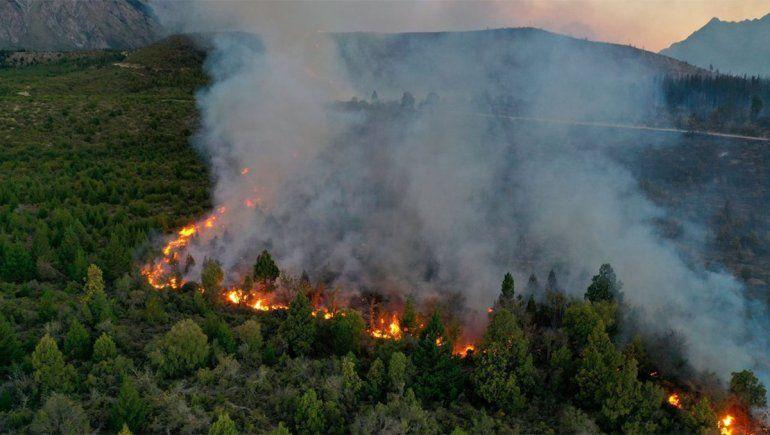 Ambiente avanza en un Plan de Reforestación para zonas afectadas por el fuego
