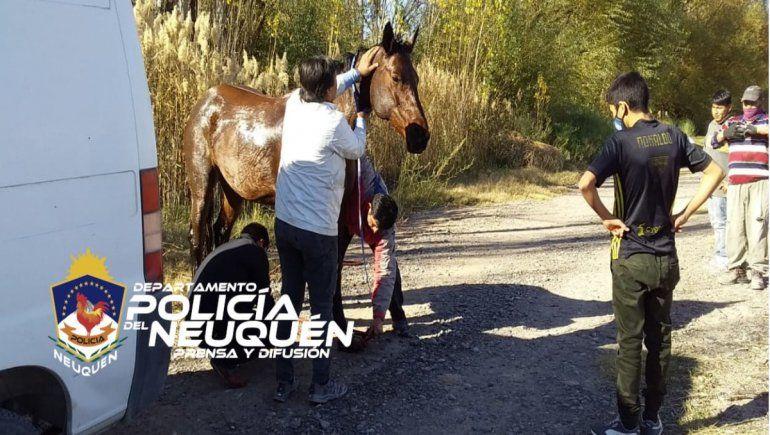 Rescataron a una yegua que se cayó al agua en el oeste
