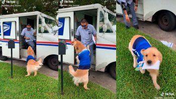 TikTok: perrito busca la correspondencia y cautiva con su ternura.