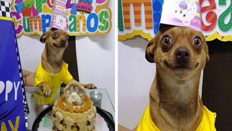 Perro celebra su cumpleaños y cautiva a miles en Facebook