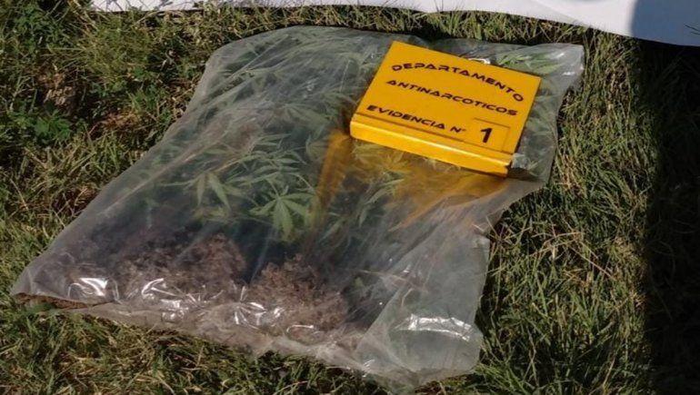 En uno de los allanamientos realizados por el robo, la Policía halló varios plantines de marihuana.