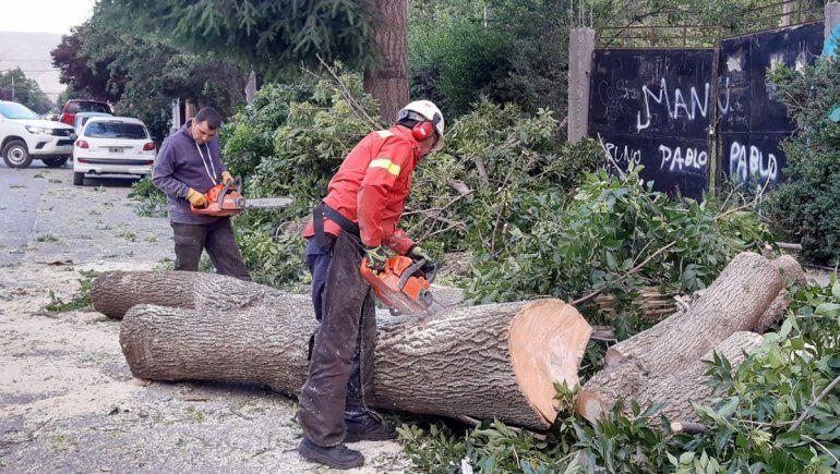 El viento provocó caída de árboles en Junín