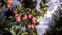 renspa: 85 productores menos para exportar a brasil