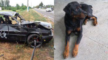 su pareja murio en un accidente y busca recuperar a akiles, el perro que criaron juntos