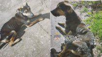 maltrato animal: la denuncia de un vecino salvo a un perrito desnutrido