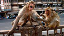 los primates tendrian una cierta conciencia sobre la muerte