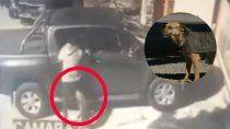 perro callejero heroe: salvo a un empleado de una fabrica de un motochorro