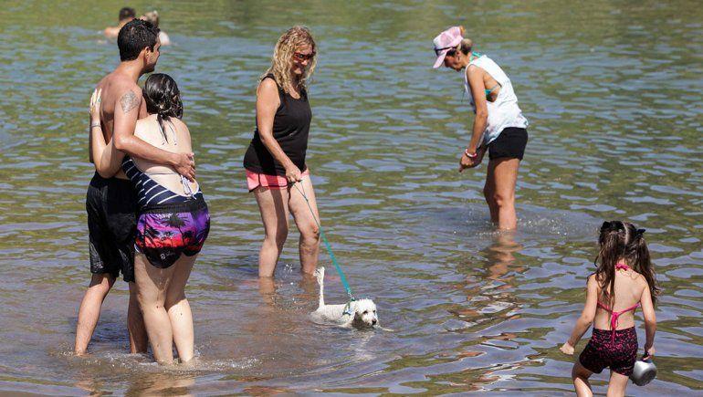 Tras la polémica en Mari Menuco, ¿se puede llevar mascotas al río?