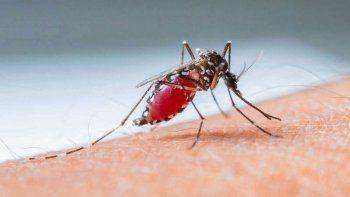 los consejos de los especialistas para prevenir el dengue