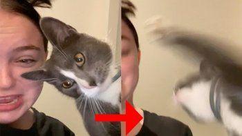 El gato no deja de sumar reproducciones en YouTube