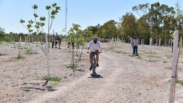 En un año el municipio plantó más de 11.500 árboles
