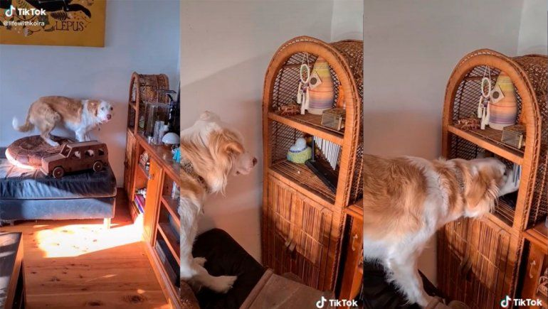 TikTok: tierno perro disfruta de tocar unas campanas de viento
